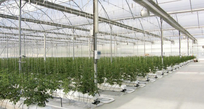 Süs Bitkisi Üretim Seraları
